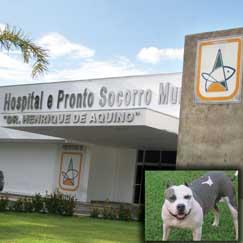 Vista da porta da frente do pronto socorro de cuaiaba e do lado uma foto d epitbull pr ailustrar
