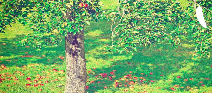 frutomaduro