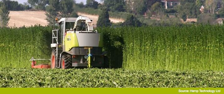 Hemp Harvest