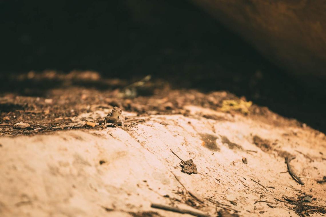 escape_natural_park_quest_mesa_verde_lizard