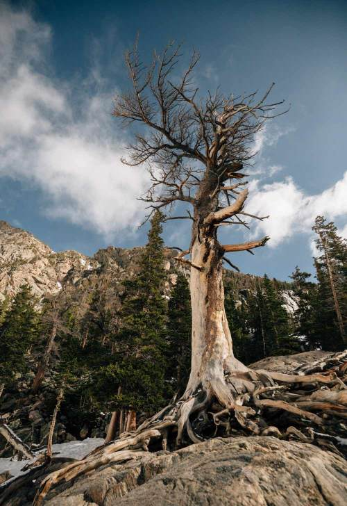 three_ways_to_explore_rocky_mountain_national_park_quest_tree_emerald_lake