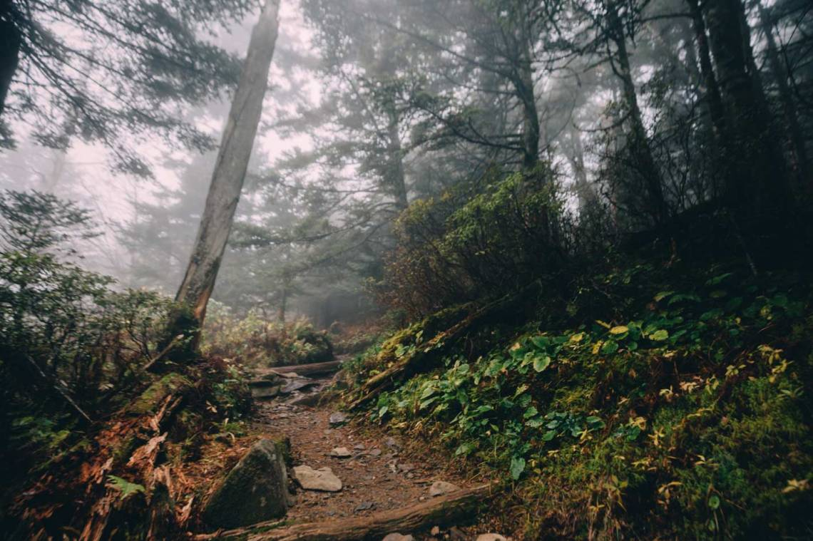 appalachian_trail_mountains_forest_tennessee_fog_silence_smoky_mountains_national_park_quest