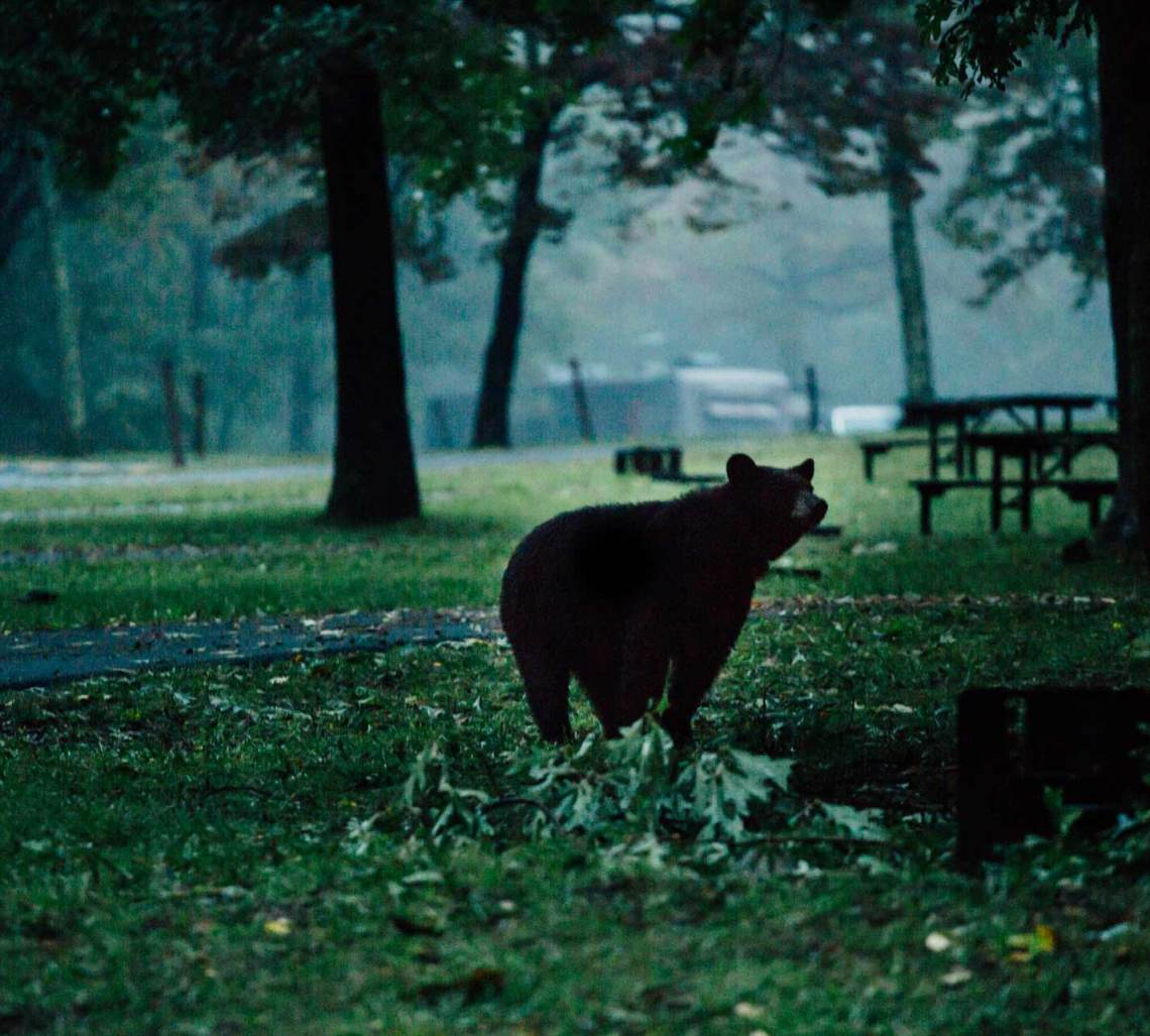 camping_black_bear_falls_national_park_quest_shenandoah