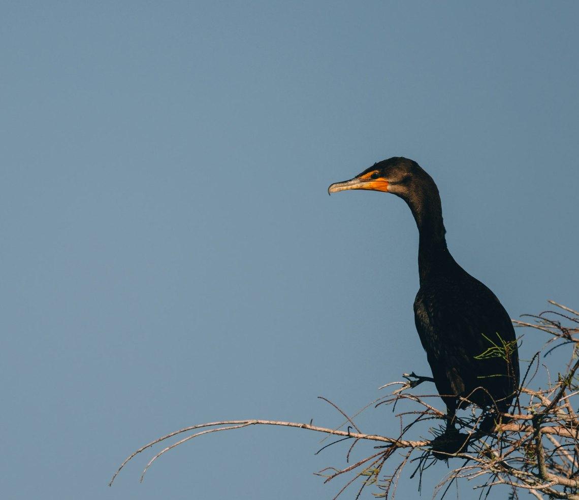 letter_for_birds_national_park_quest_6