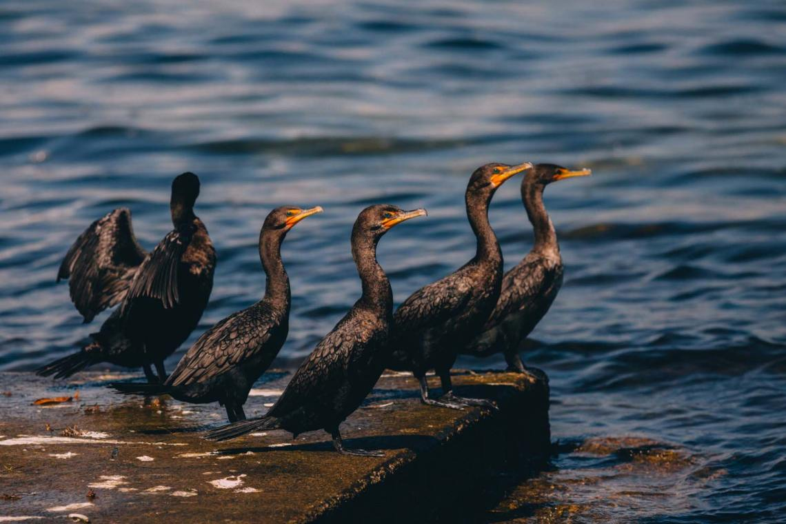 three_ways_visit_biscayne_national_park_birds
