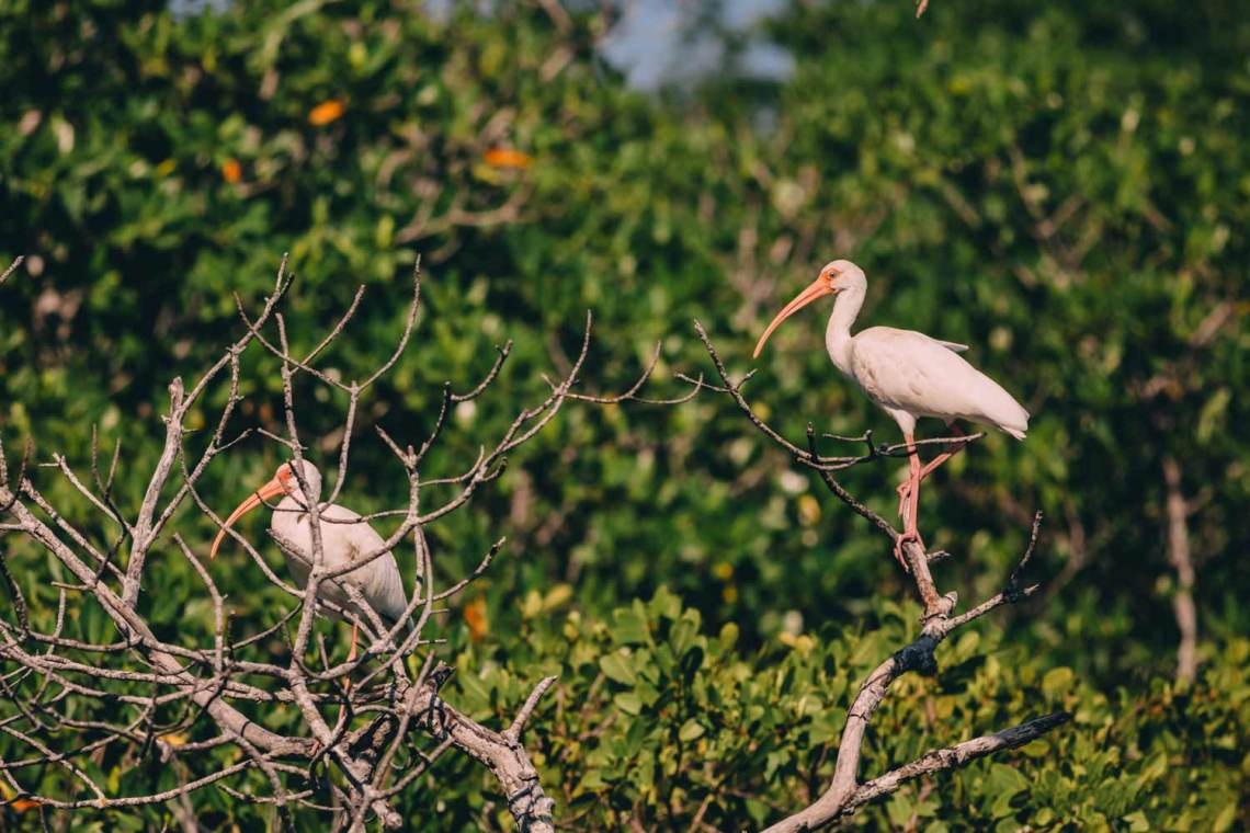 three_ways_visit_biscayne_national_park_birds_5