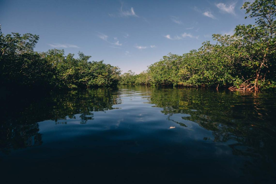 three_ways_visit_biscayne_national_park_mangrove