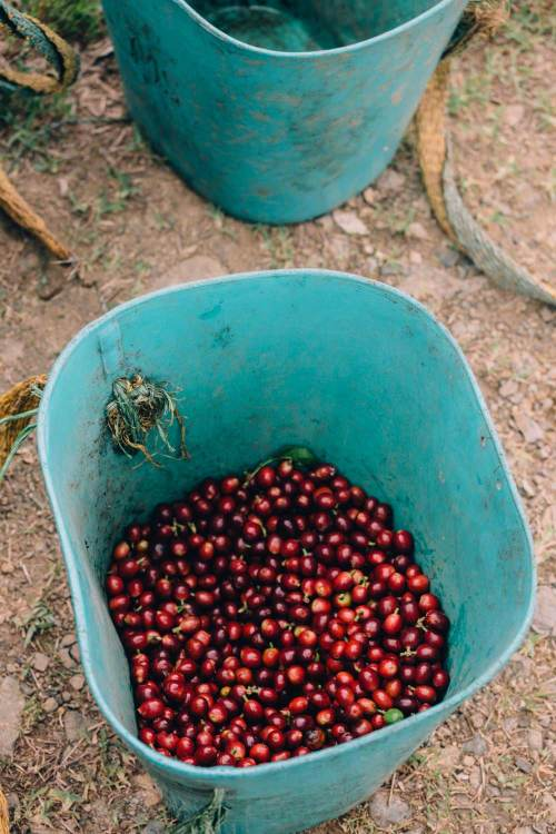 colombia_coffee_break_beans_bucket