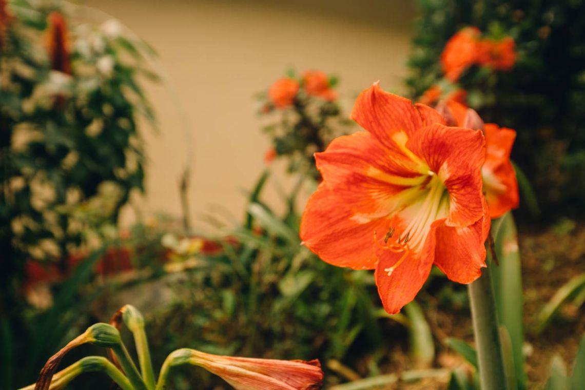 colombia_coffee_break_flower