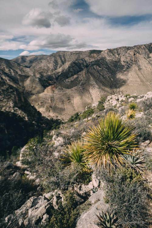 guadalupe_mountains_national_park_guadalupe_peak_trail_plants