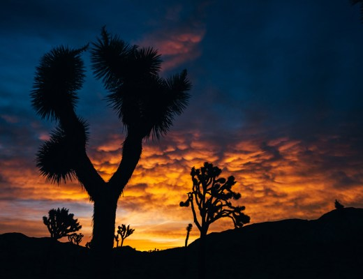 joshua_tree_meaning_cover