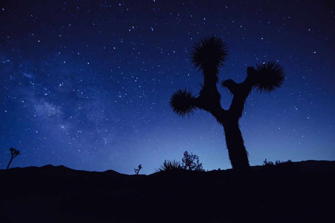 joshua_tree_meaning_night_sky