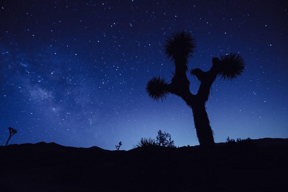 joshua_tree_meaning_night_sky