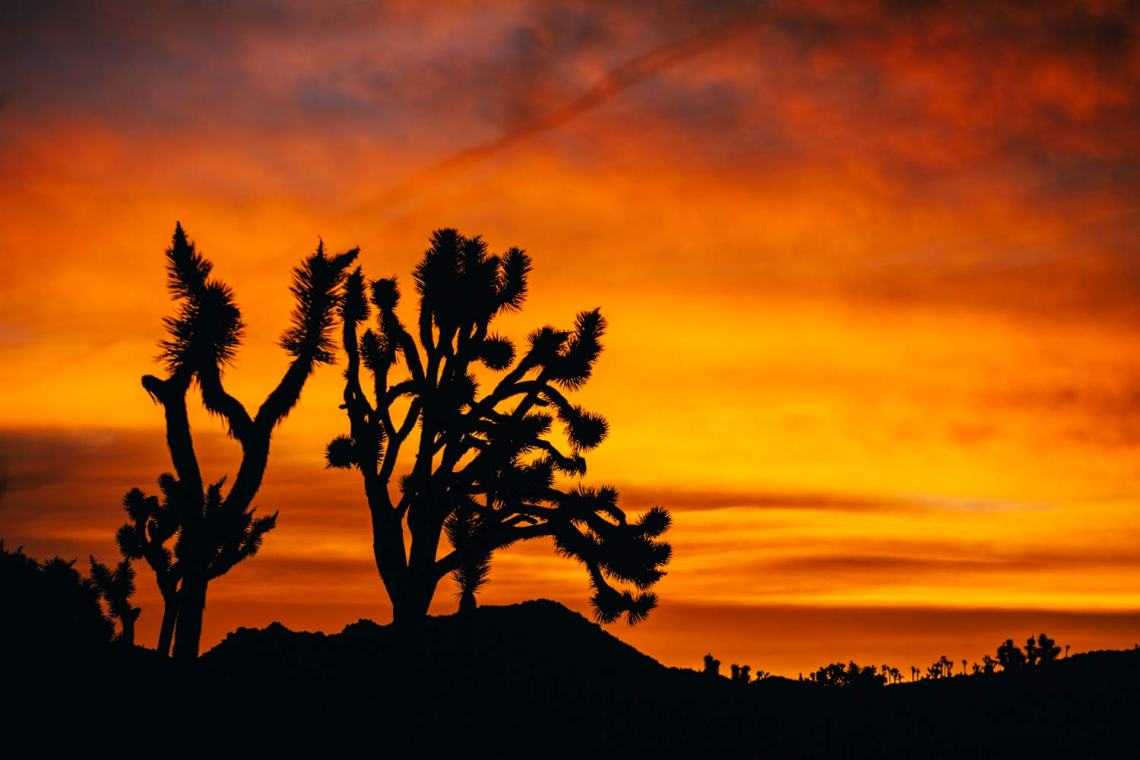 joshua_tree_meaning_tree_silohuette_sunrise