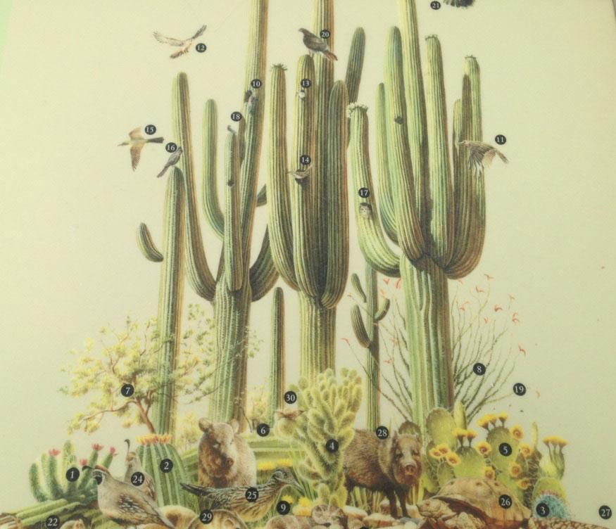 reflection_land_saguaros_national_park_display