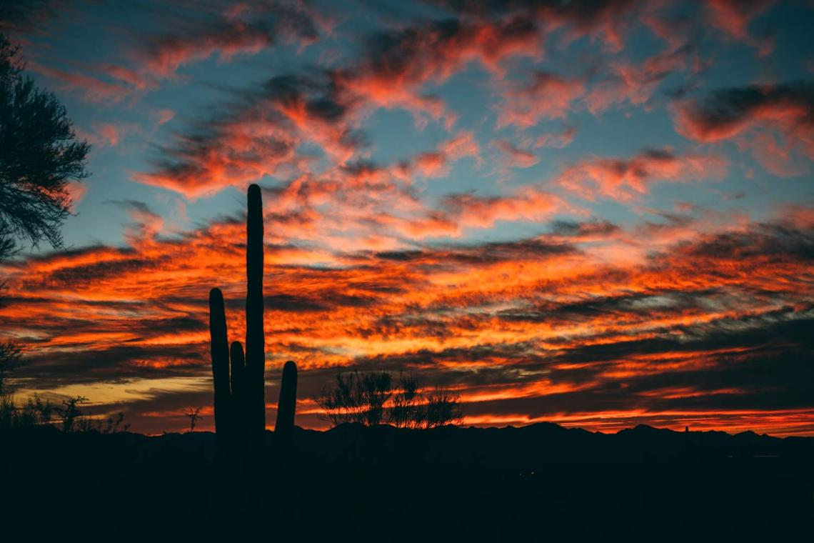 reflection_land_saguaros_national_park_sunset