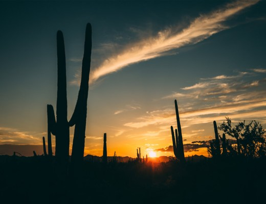 reflection_land_saguaros_national_park_sunset_cover