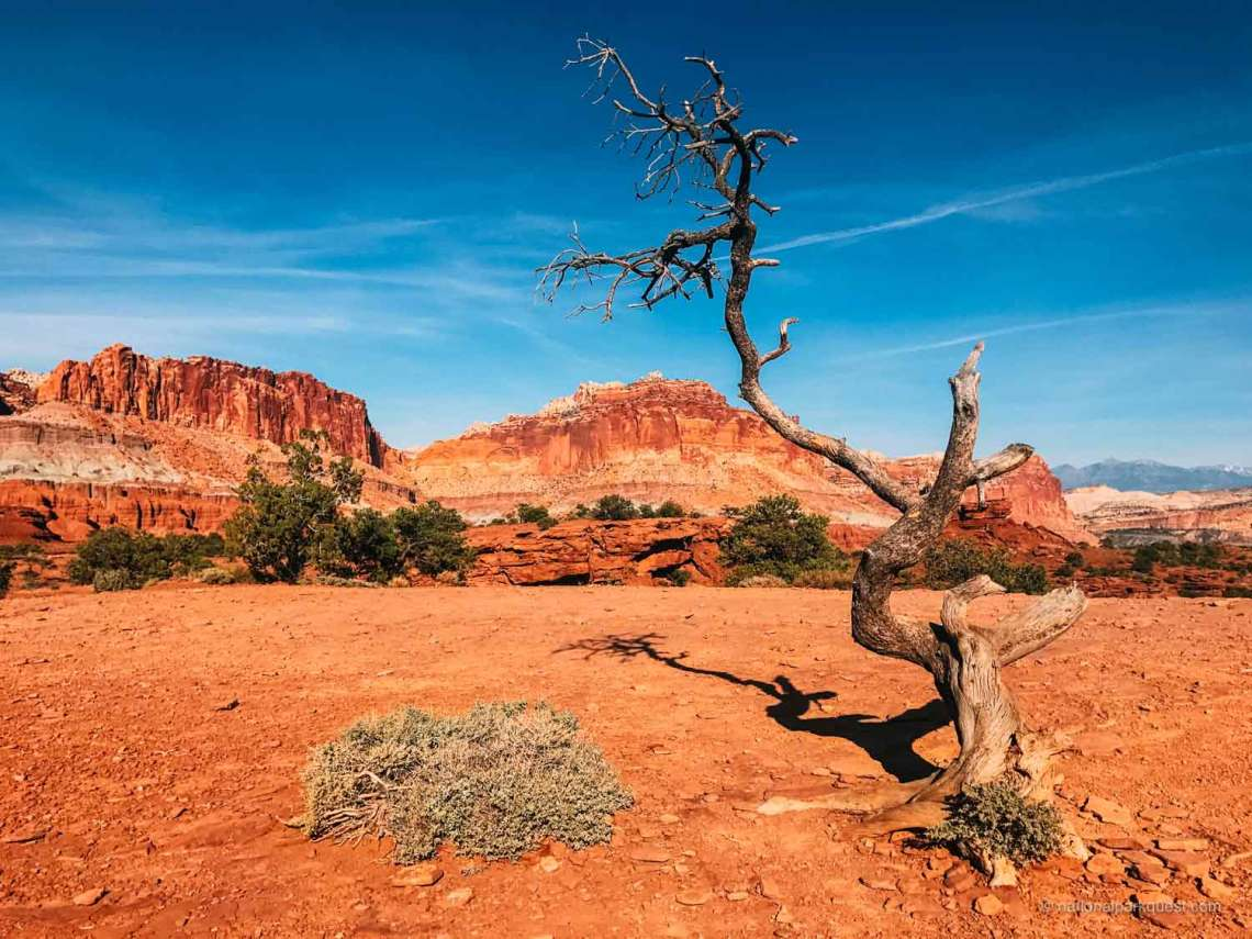 7_capitol_reef_national_park_facts_tree