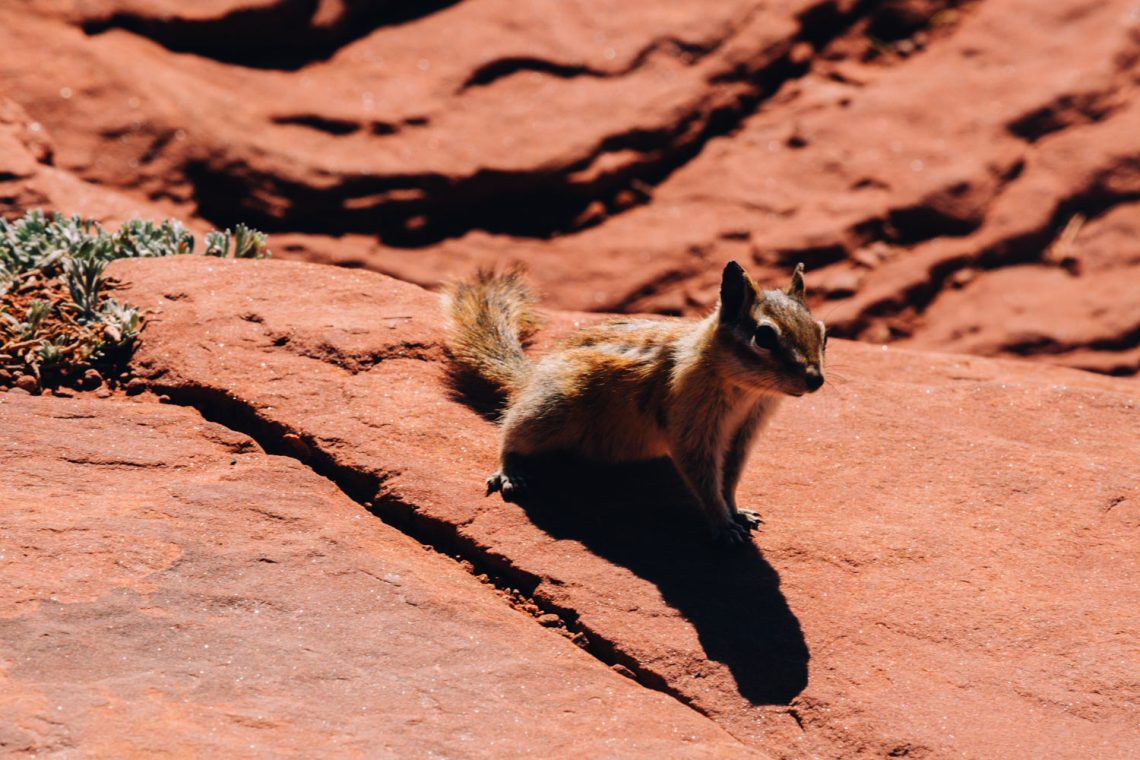 canyonlands_national_park_quest_squirel
