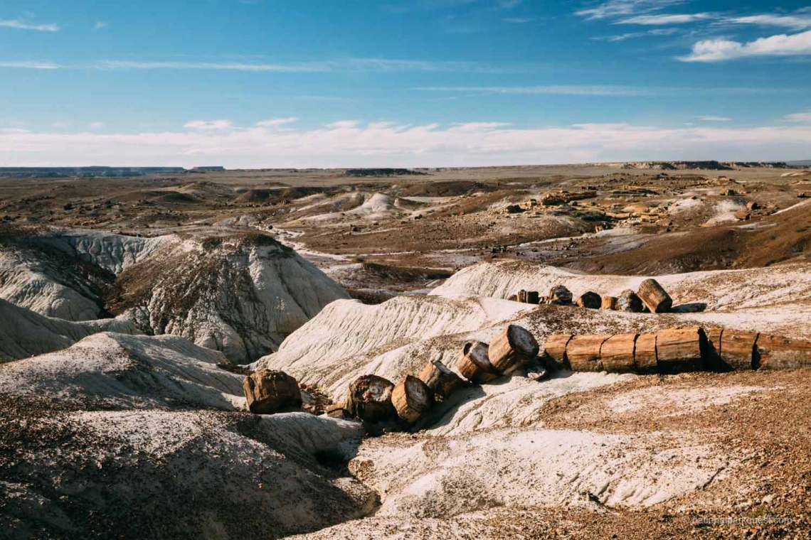 petrified_forest_national_park_voice_echo_trees_landscape