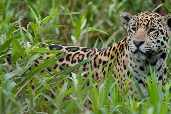 Photo for 2017 Brazil Pantanal Jaguar Wildlife Photo Expedition