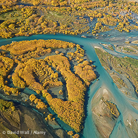 DTB673 Autumn Willow Trees and Delta where Clutha River enters Lake Dunstan, Central Otago, South Island, New Zealand - aerial