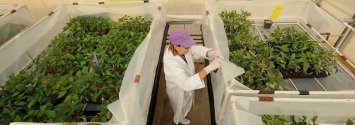 Monsanto Asks World Health Organization to 'Retract' Cancer Link
