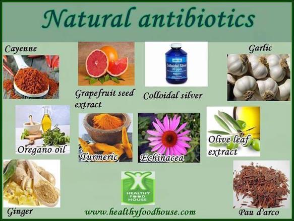 Best Natural Antibiotic Herbs