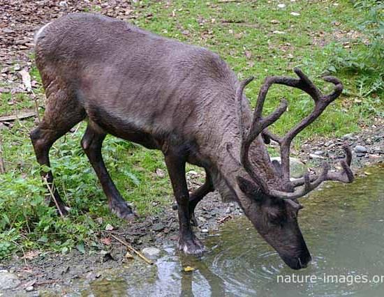Deer at the Zuirich Zoo