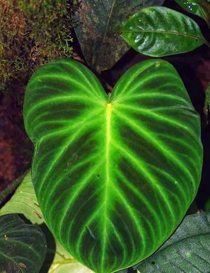 Green Leaf Image