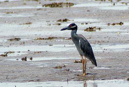 Heron on a Beach
