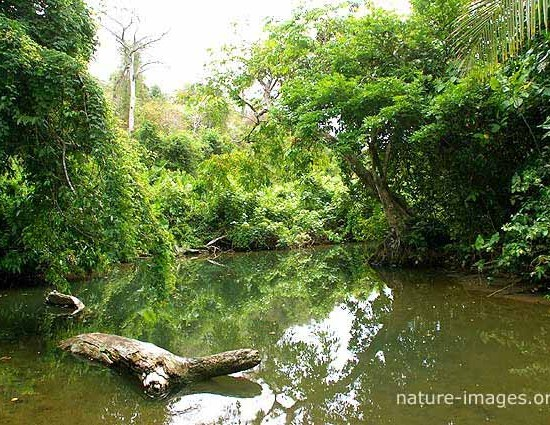 Jungle River scene photo