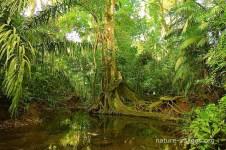 jungle scenery charco hike
