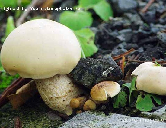 Fungi in the forest