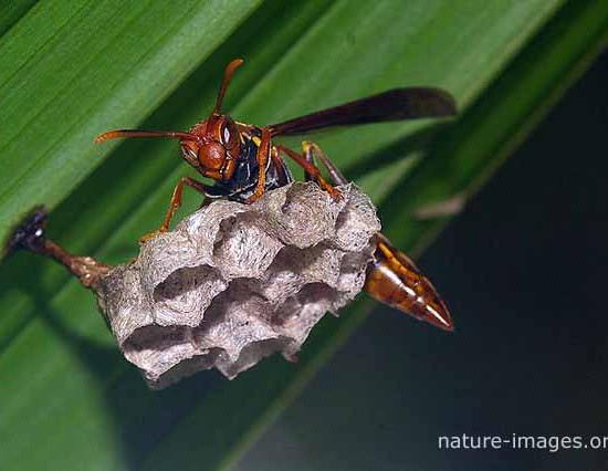 Wasp Nest Photo