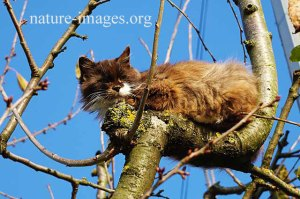 Cat sleeping in a tree