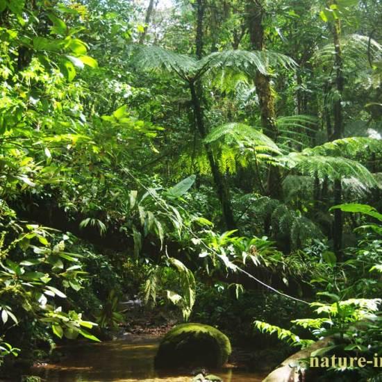 Cloud forest Altos del Maria, Panama
