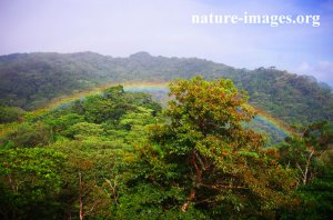 Rainbow over the Rain Forest
