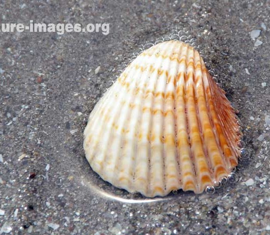Orange Shell on a beach