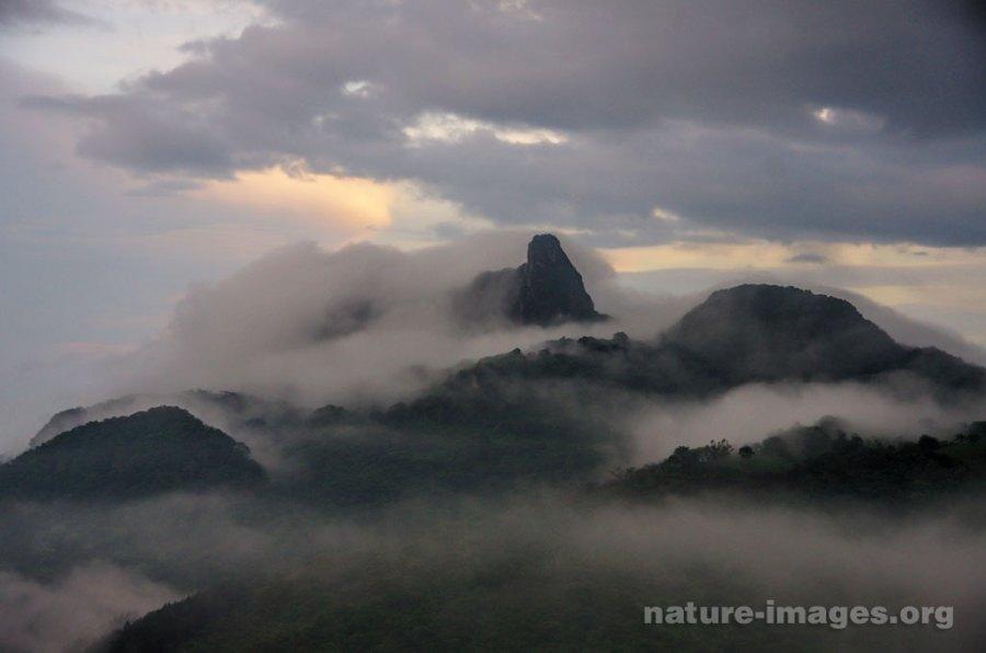 Mountain Cloud Forest Mist
