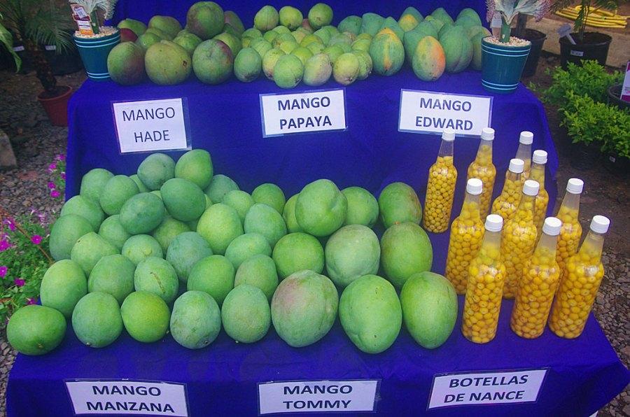 5 big species of the mango fruit