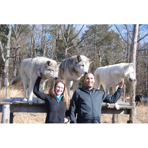 Medium Crop Of Wolf Hybrid Dog