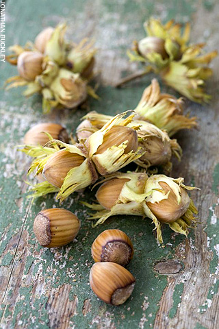 Hazelnuts are Without a Fleshy Exterior