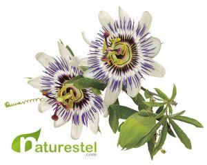 PassifloraNaturestel