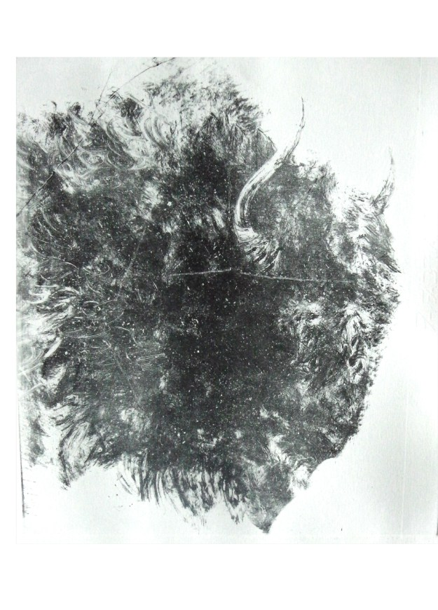 'Buffalo Profile' Lithograph 33x33cm