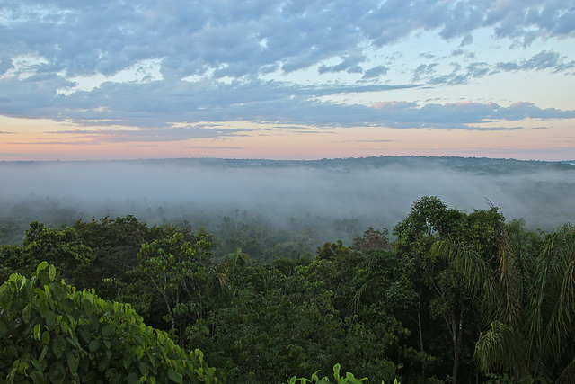 The Amazon, photo by Carla Arena, licensed under Creative Commons BY-NC 2.0
