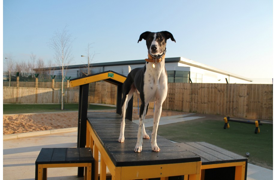 Dog Agility Adventure Area 1-920x600