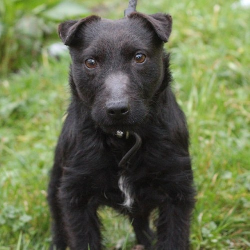 TED PATTERDALE