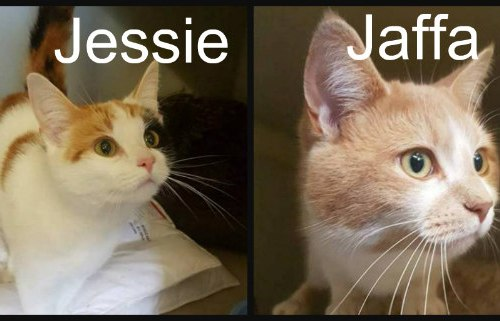jessie and jaffa
