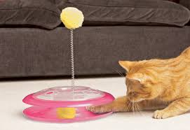 cat playground toy